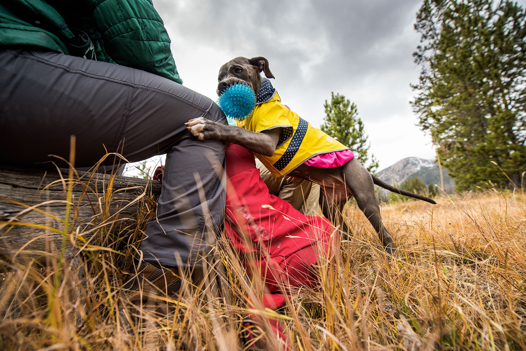 austin-trigg-patagonia-sawtooth-hiking-stanley-lake-dog-play-ball-advenure-wilderness-forest-idaho-outside-lifestyle-day-fall-weather-mountains.jpg
