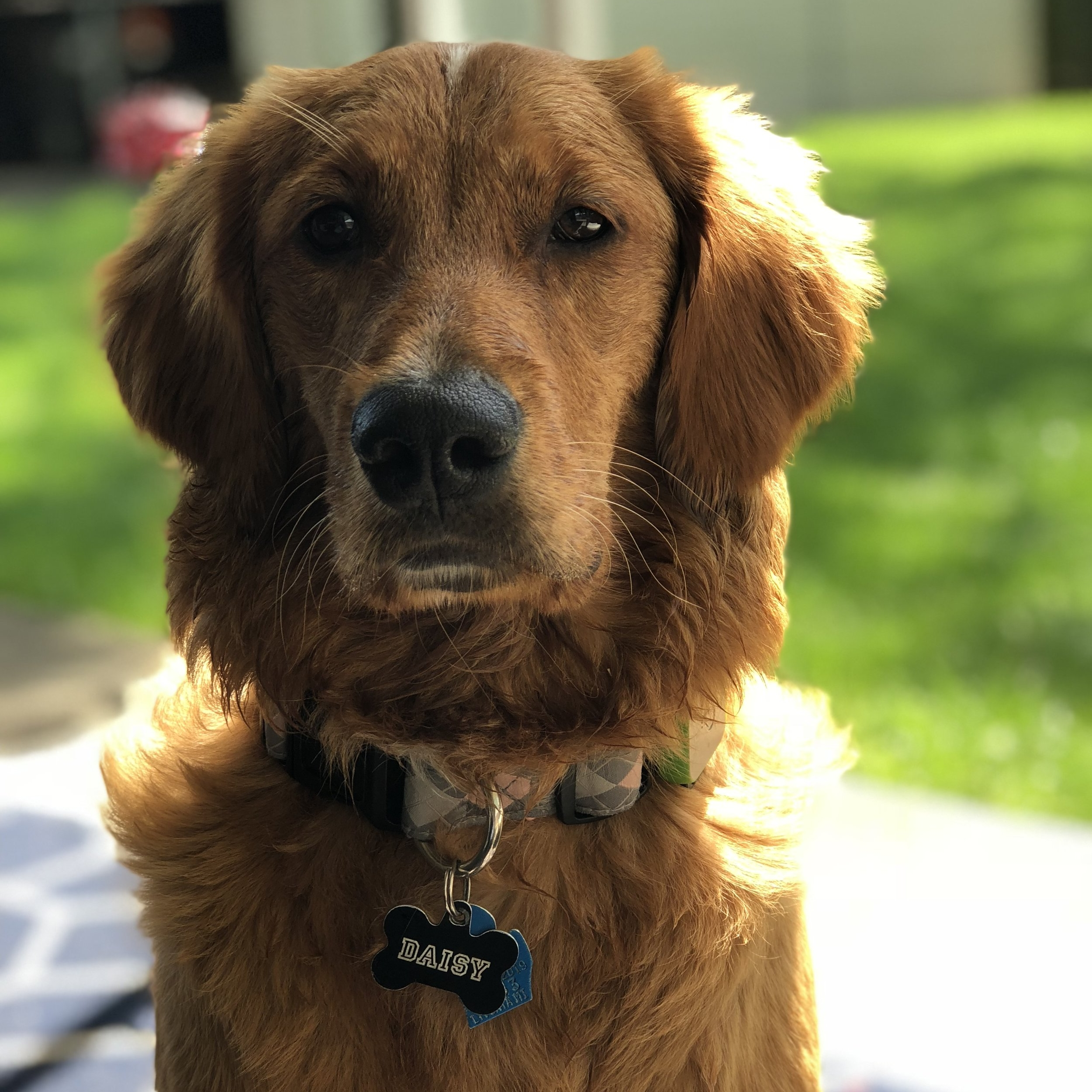 Daisy,our top dog actress in April - Daisy's mom has shared 26 videos of Daisy eating, drinking, scratching, walking, and living a good dog life.