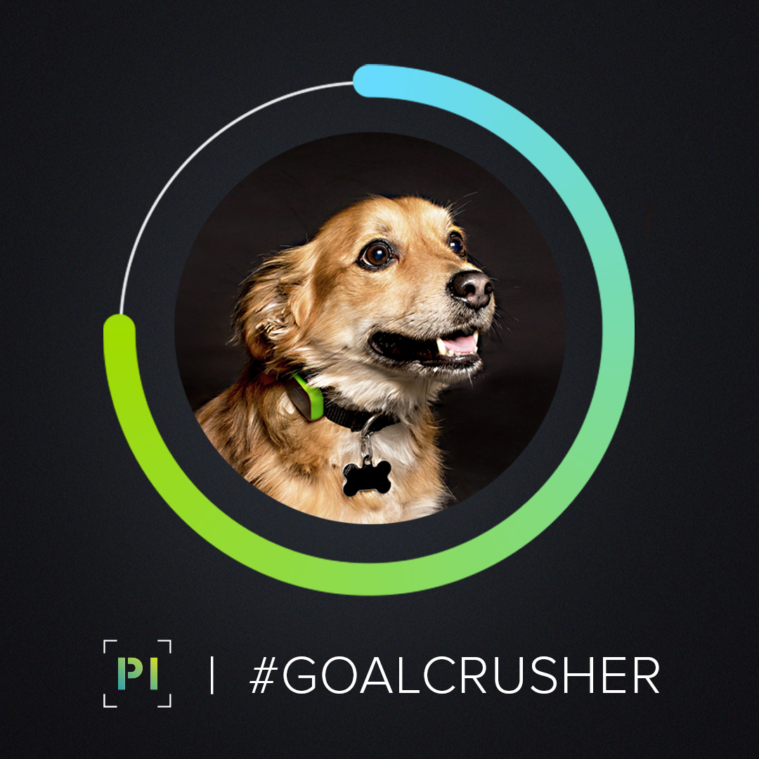 Activity goals help owners increase their dogs' activity levels -
