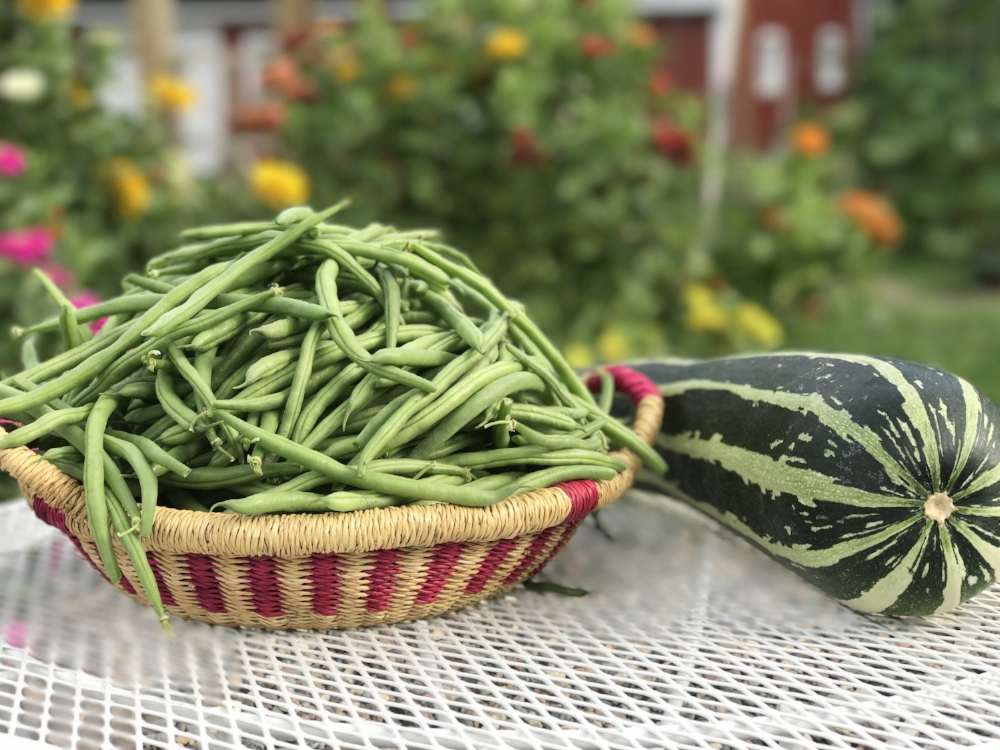 Fortex pole and Jade bush string beans. And the rogue summer squash.