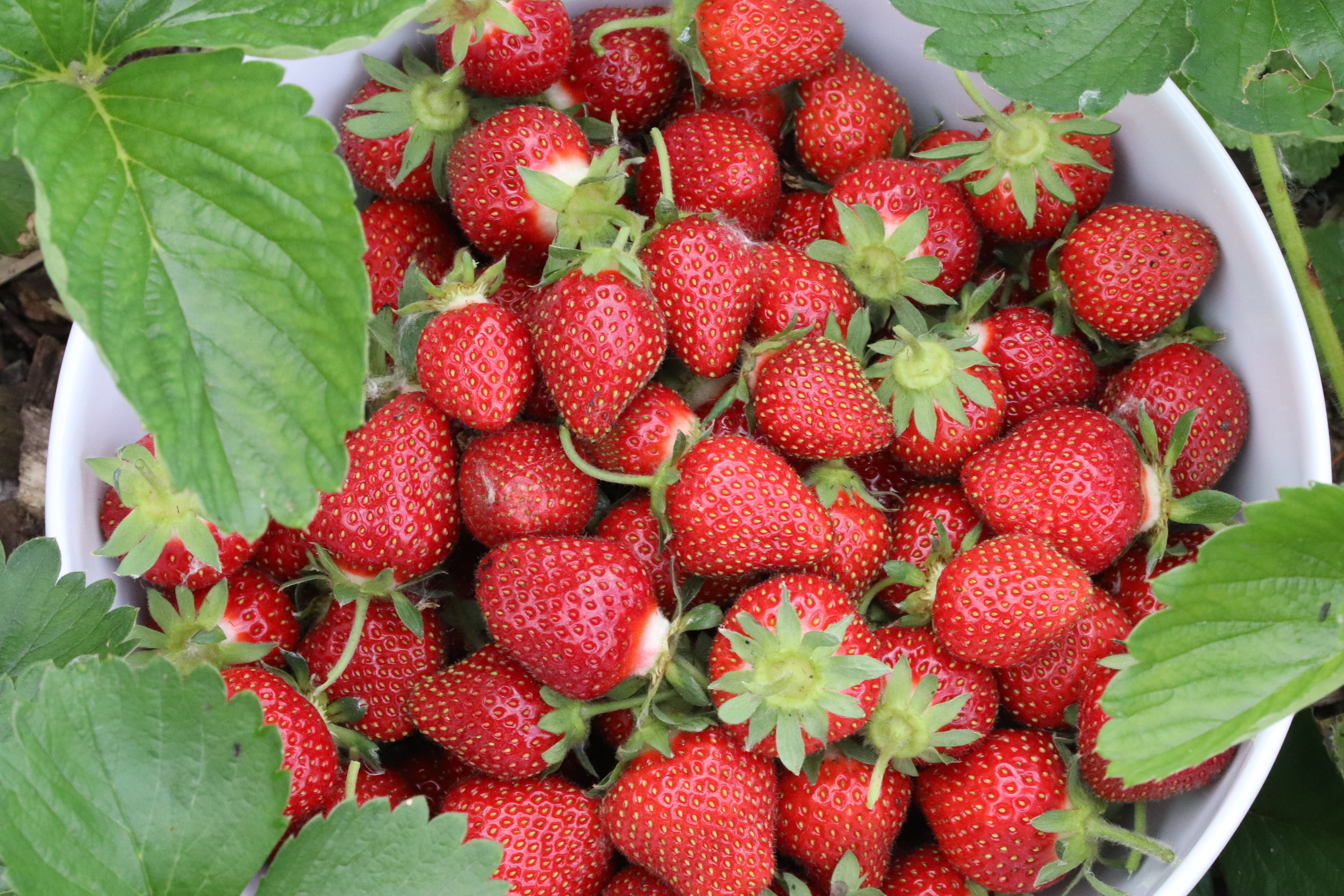 june is for strawberries