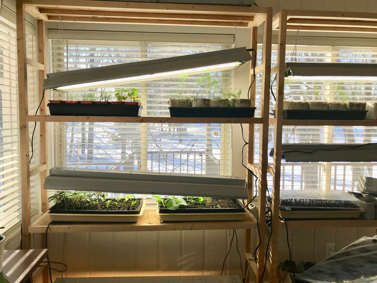 You can see how we adjust the lights to meet seedling height requirements. Also visible are the heat mats that are still on the tomato and pepper tray (middle left shelf).