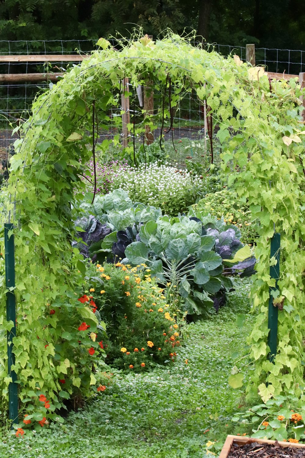 Diy Cattle Panel Garden Arbor Seed To Fork Blog By Meg Cowden