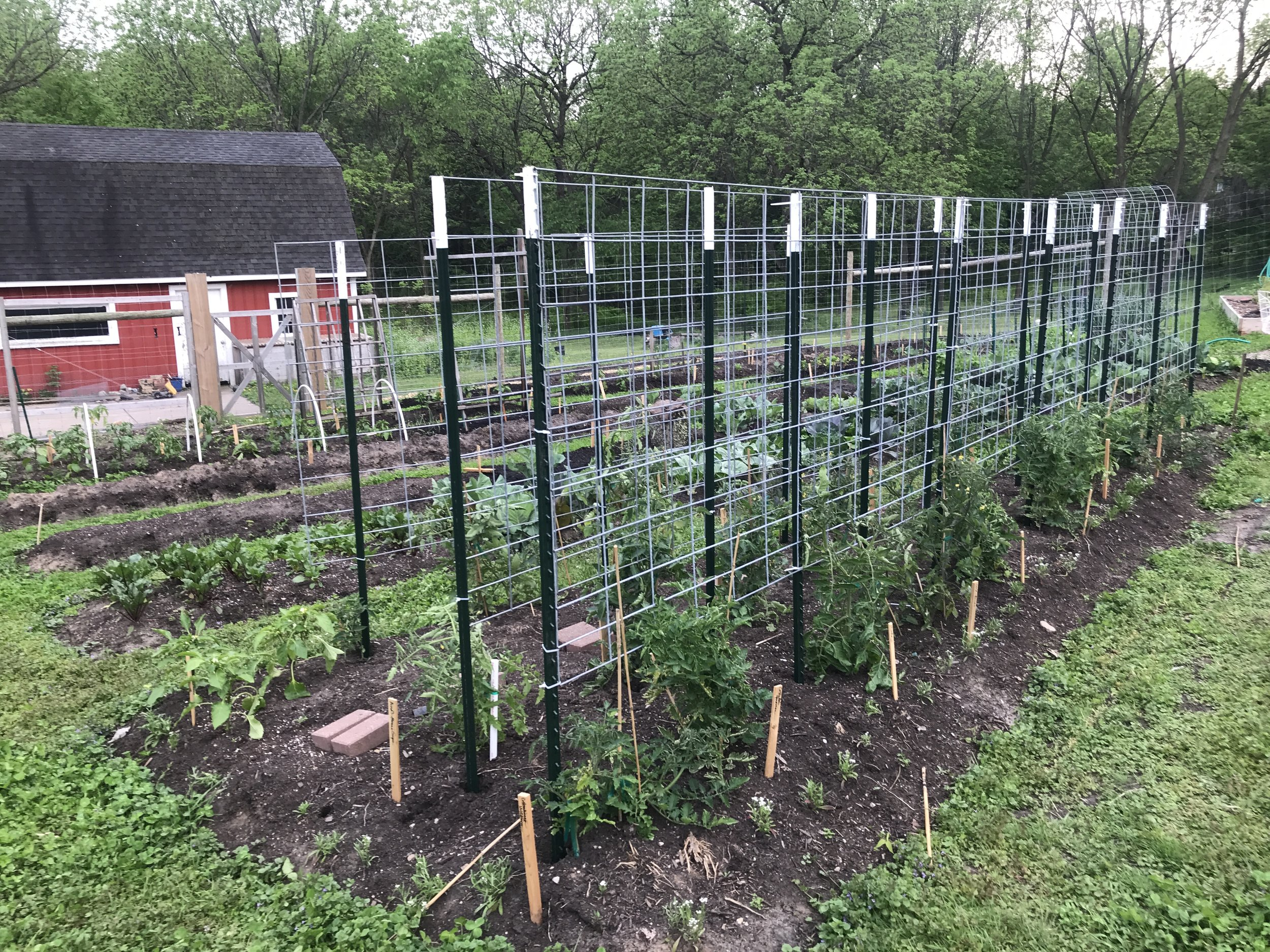 What is most exciting about this new system is that is is a play off our espalier orchard. As with our fruit tree trellis method, you grow your plants out in a single plane, two-dimensionally. While these are certainly growing out and up, the effect on the garden design is, so far, really pleasing to the eye.