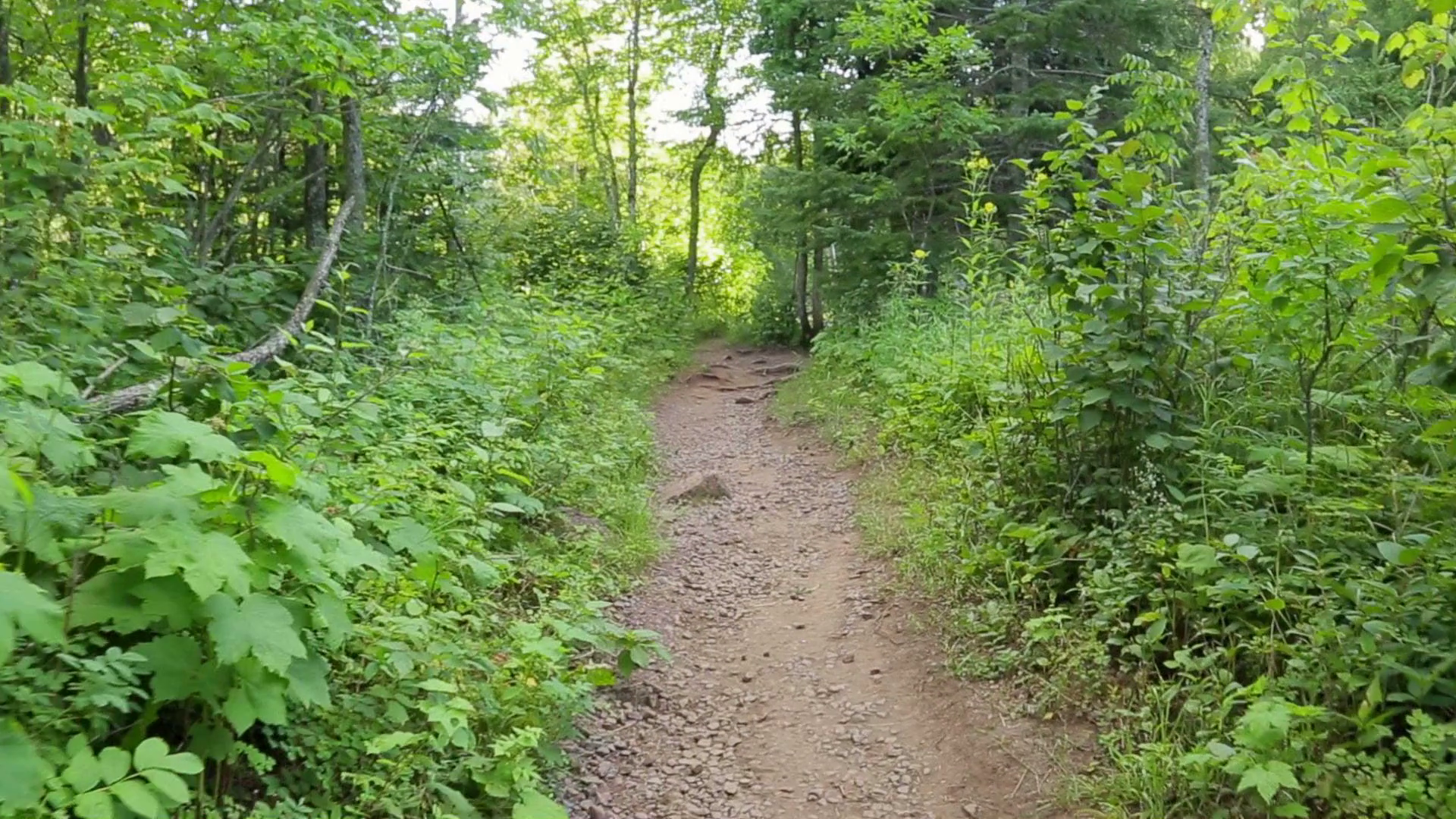 smooth-pov-shot-in-the-woods-perspective-of-walking-a-path-through-forest-with-trees-and-plants-filmed-in-northern-minnesota_bzdhd6c8l_thumbnail-full01.png
