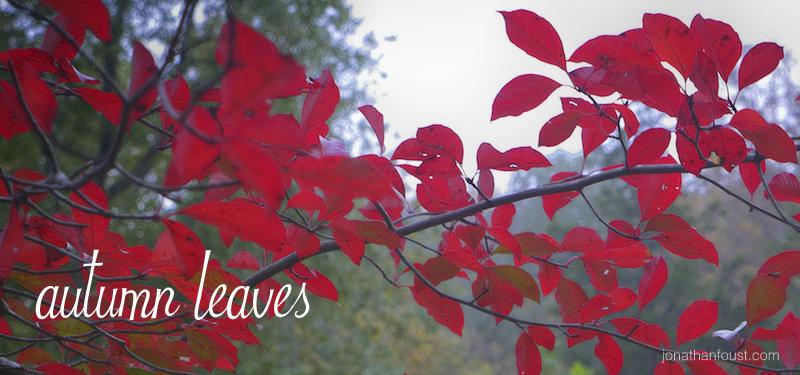 AutumnLeaves11.jpg