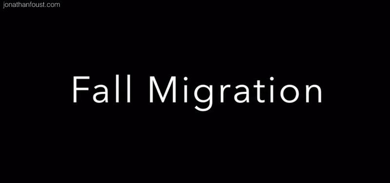 FallMigration.jpg