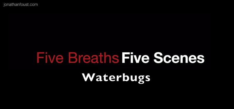 waterbugs.jpg