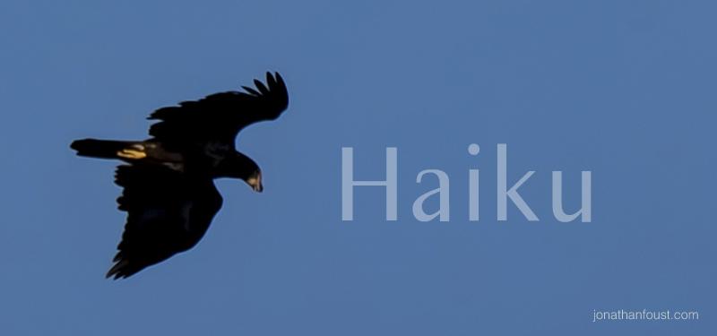 haiku1.jpg