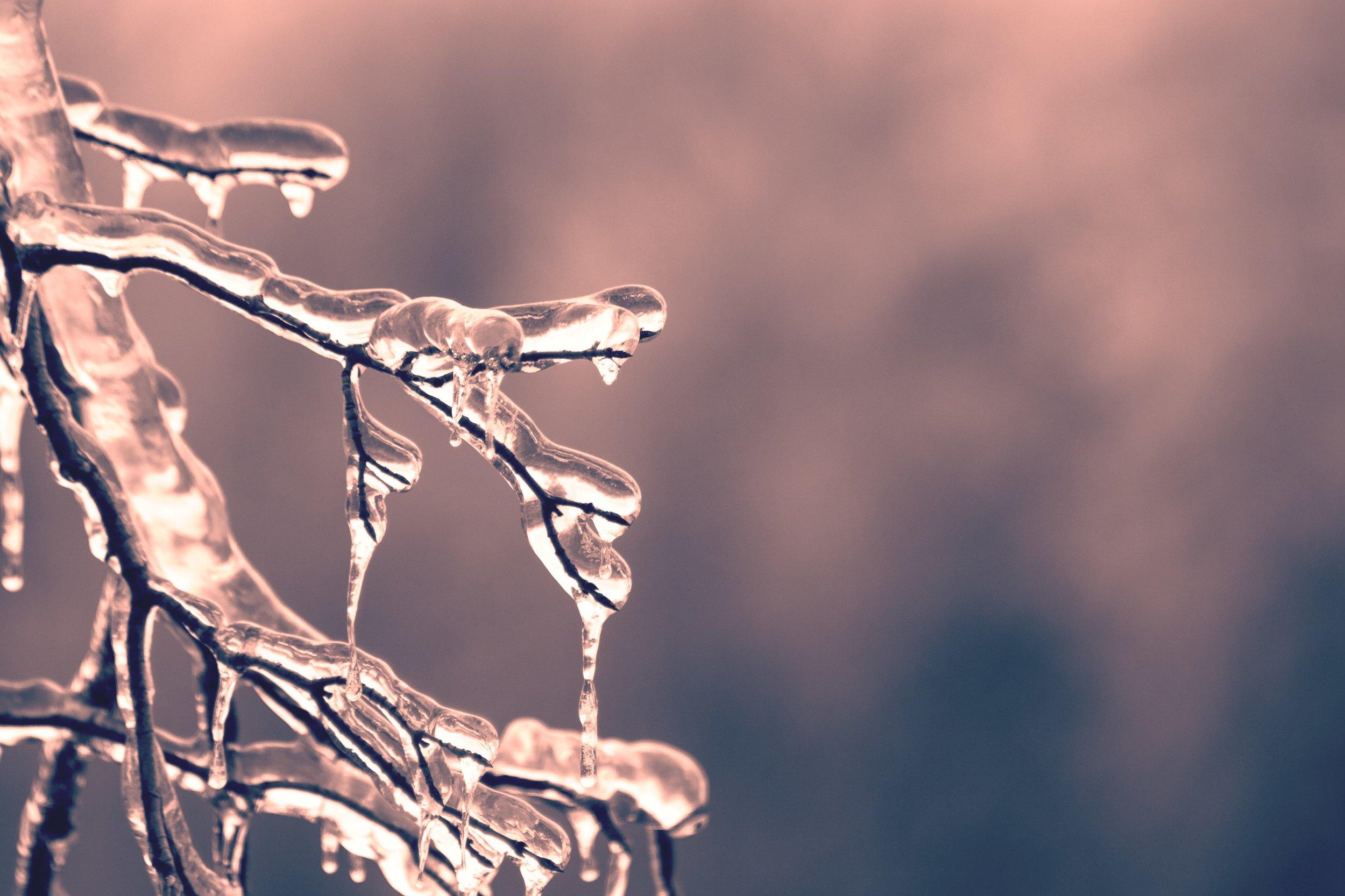 blur-branch-close-up-436792.jpg