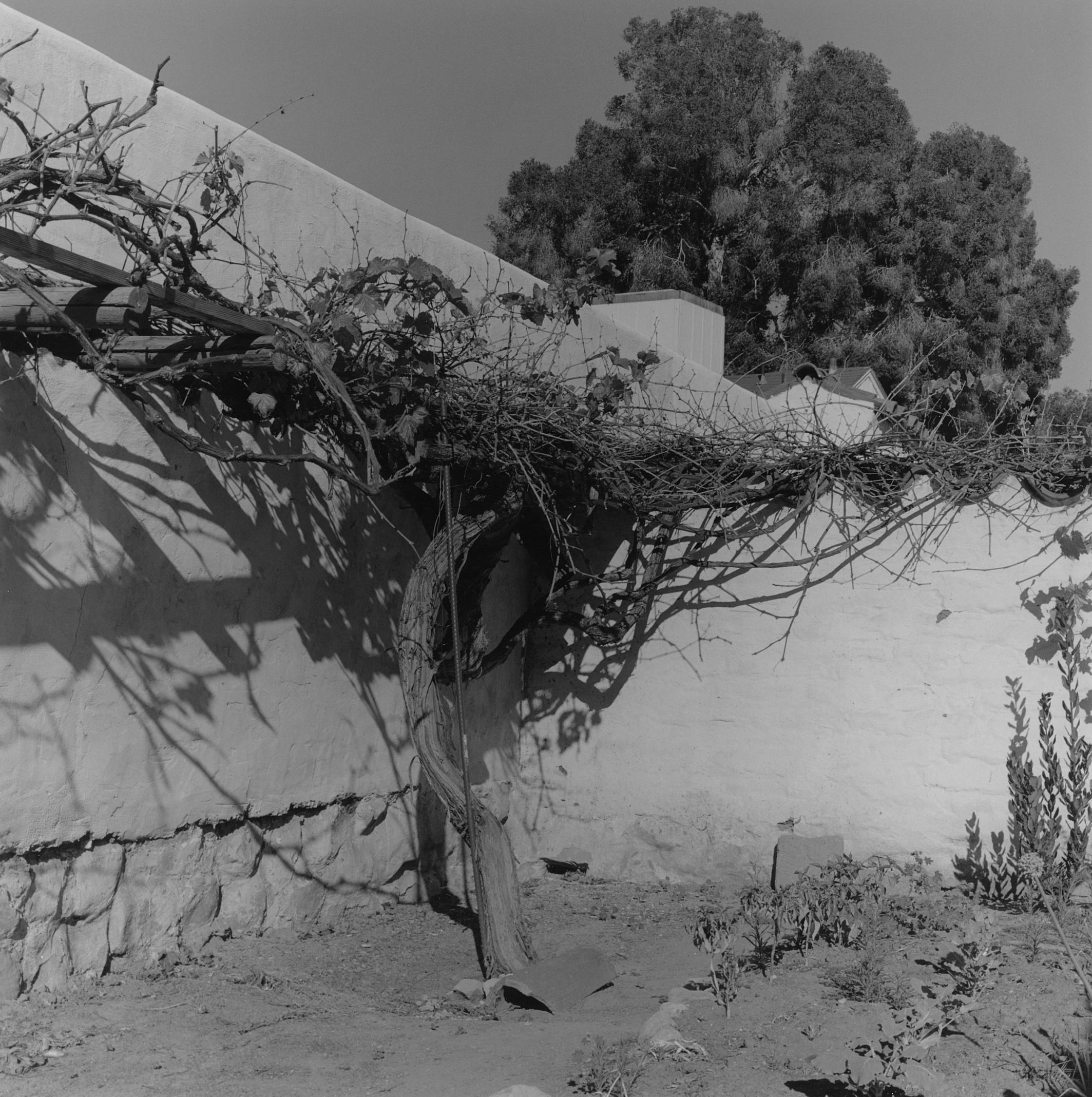 Santa Barbara Mission (Detail with Plant), California, 2015
