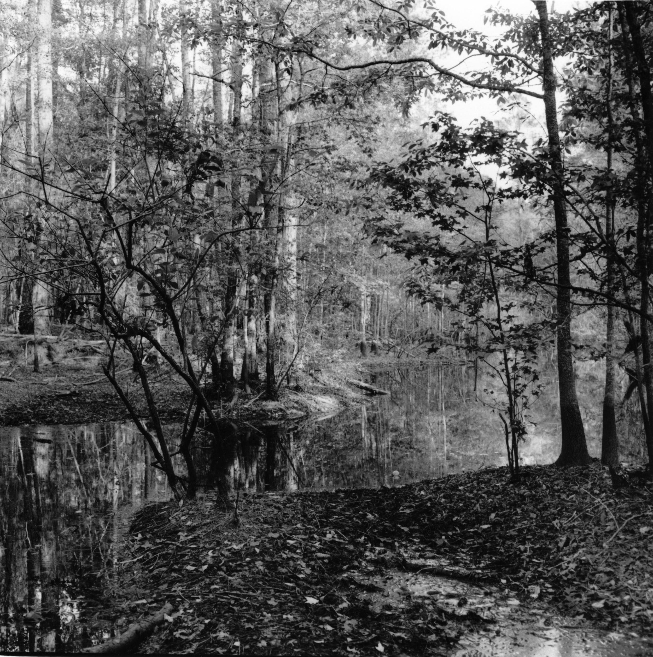 Honey Hill Battle Site, South Carolina, 1999