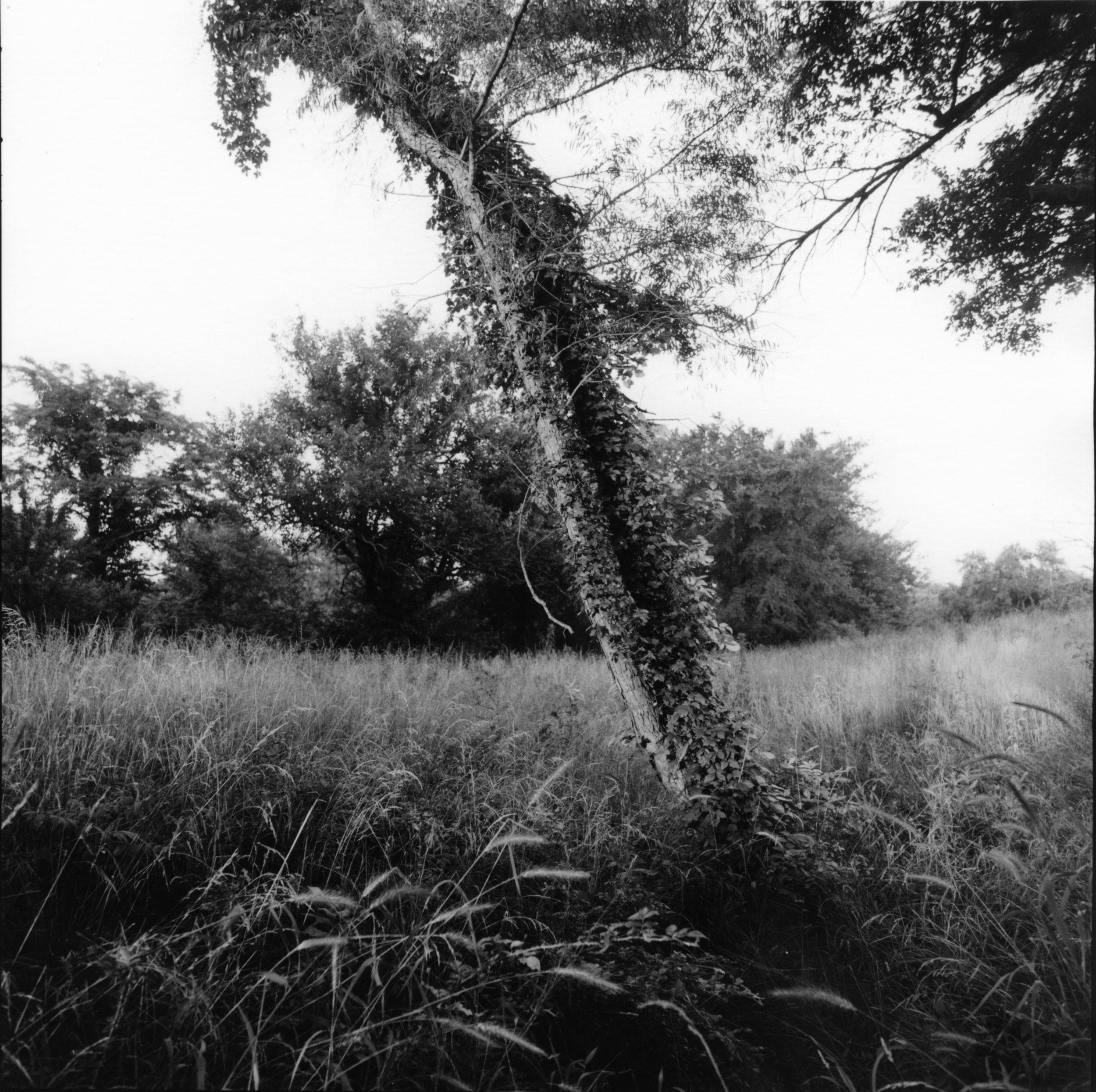 Honey Springs, Oklahoma, 1999