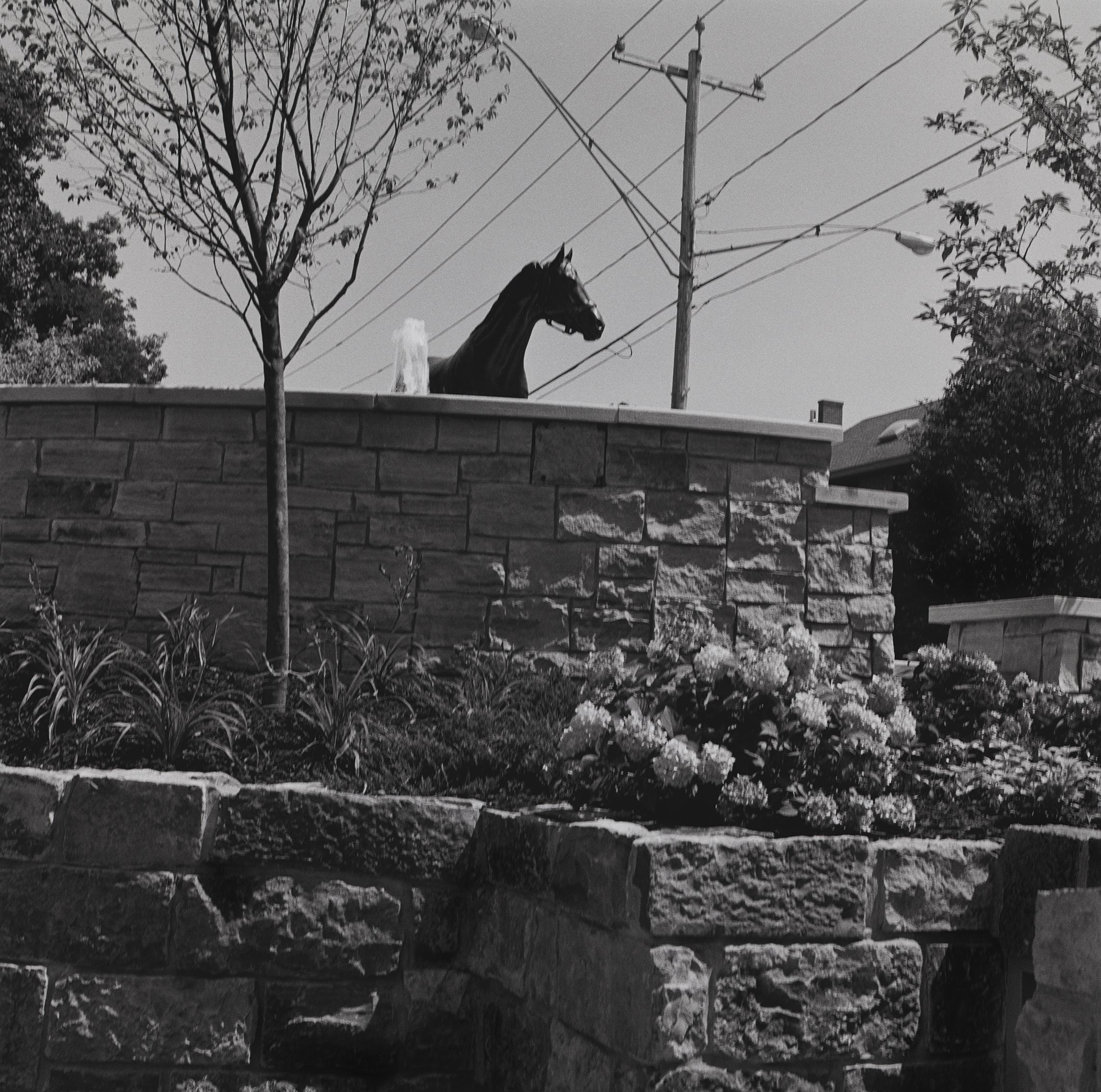 Saratoga Park, Horse Statue, Saratoga Springs, New York, 2015