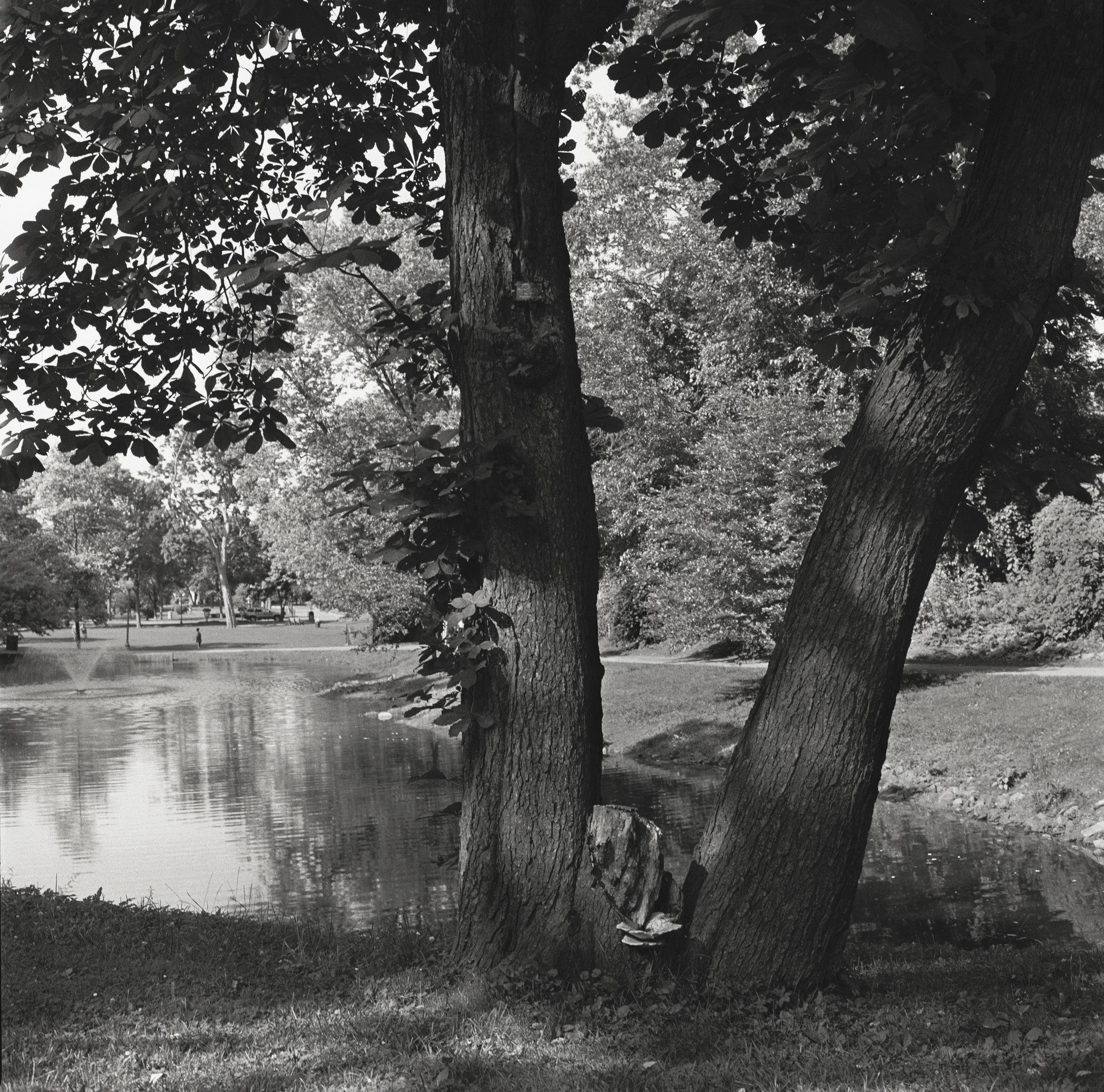 Congress Park, Saratoga Springs, New York, 2015