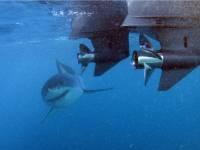 Fish Charters Chatham Islands.jpg