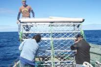 Shark Cage diving.jpg