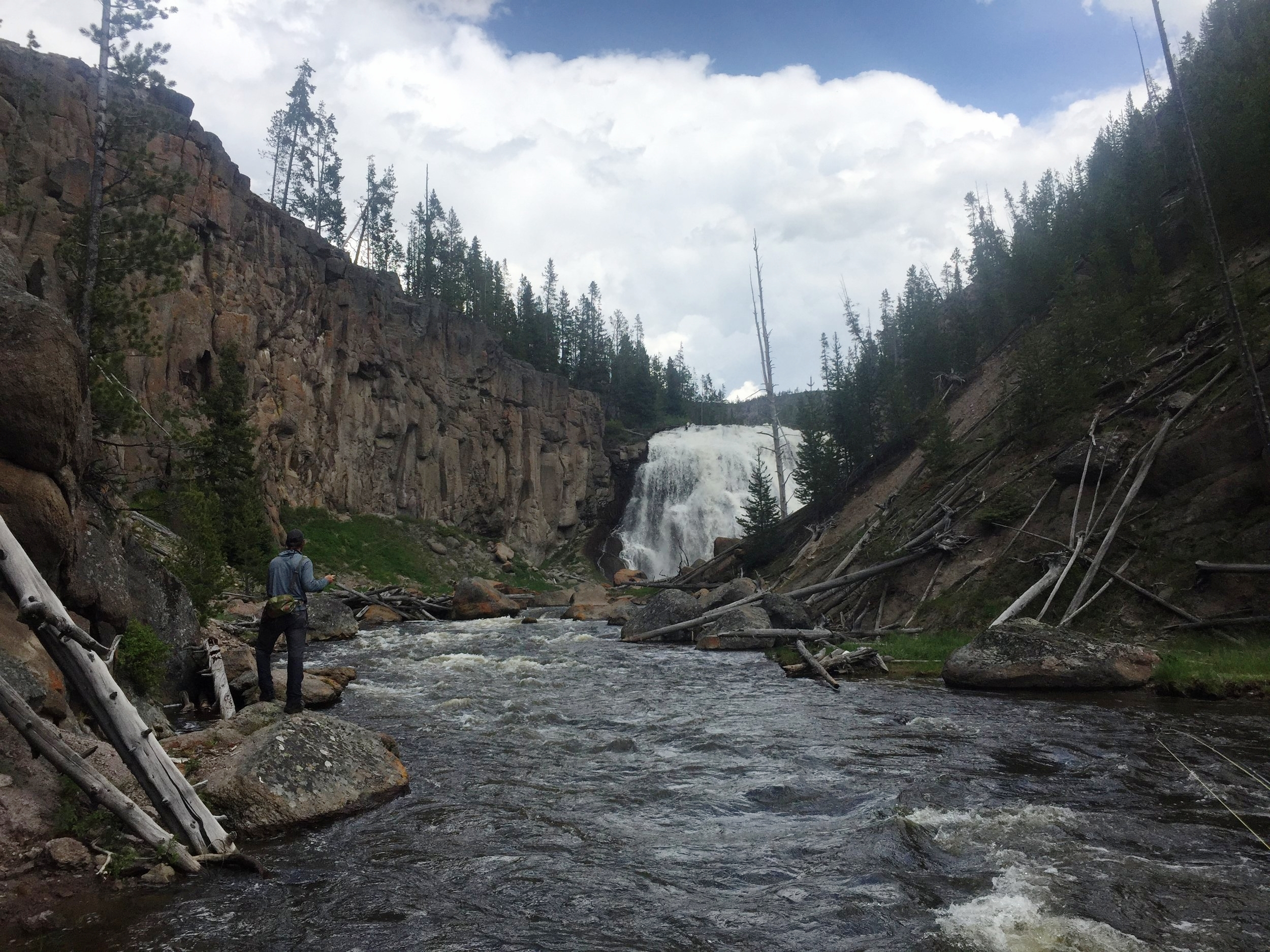 Guide, Buddy Holcombe, picking apart the Gibbon River in Yellowstone.