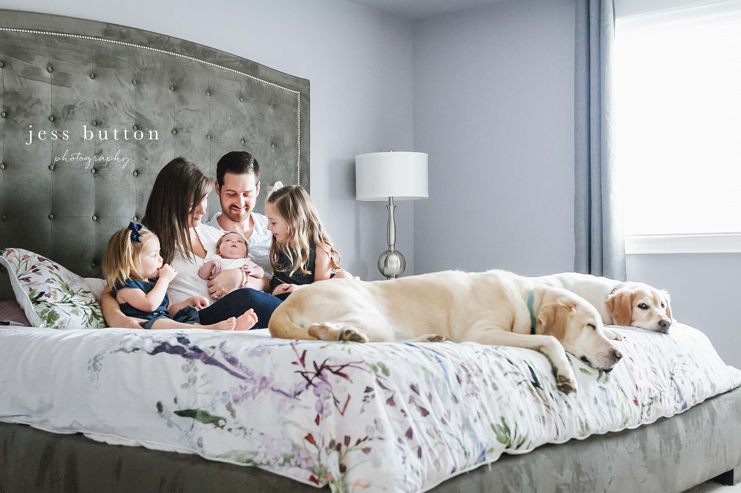 family of 5 on bed with golden retrievers - niagara newborn photography