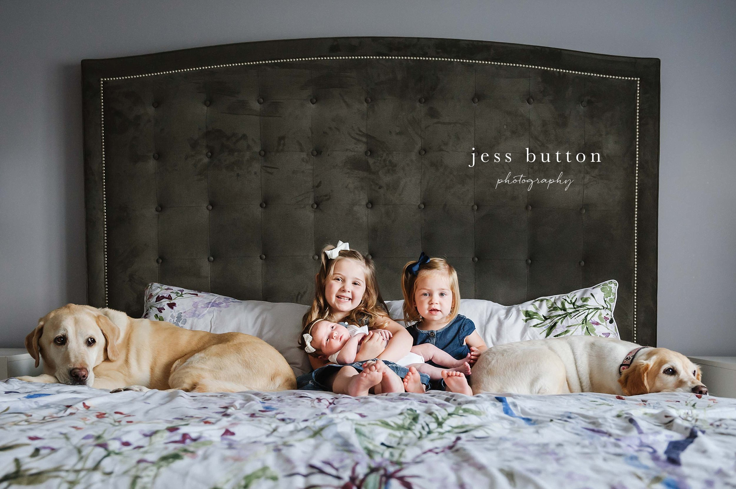 girls holding baby sister on bed with puppies - Fonthill - Niagara Newborn Photography