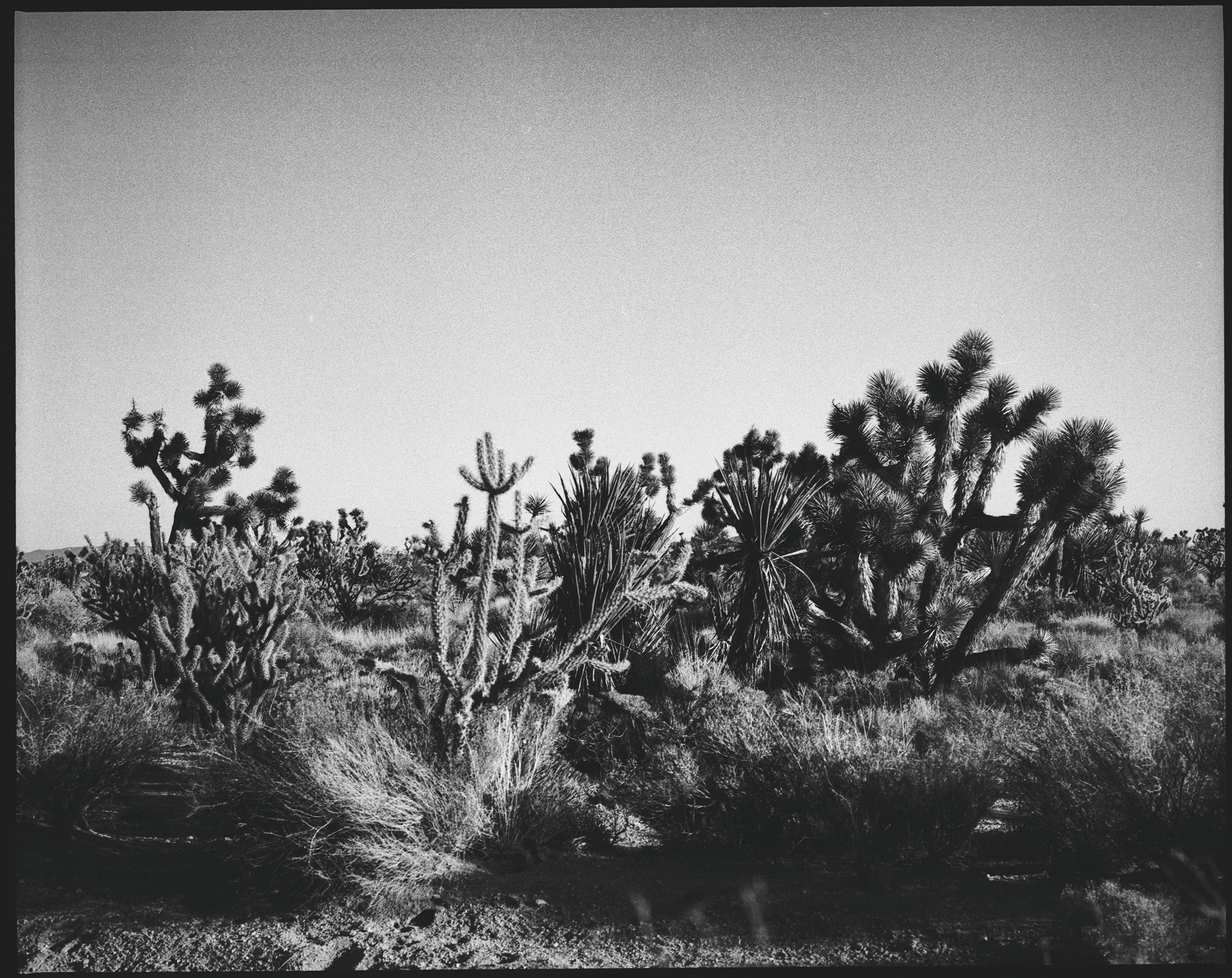 Joshua_Tree_Fine_Art_Landscape_Photography_Julien_Balmer.jpg