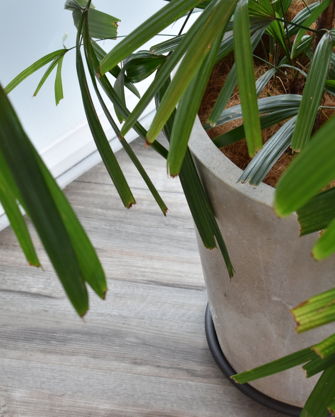 This existing plant added some much needed greenery to the entrance, and the texture of the pot matched the flooring perfectly!
