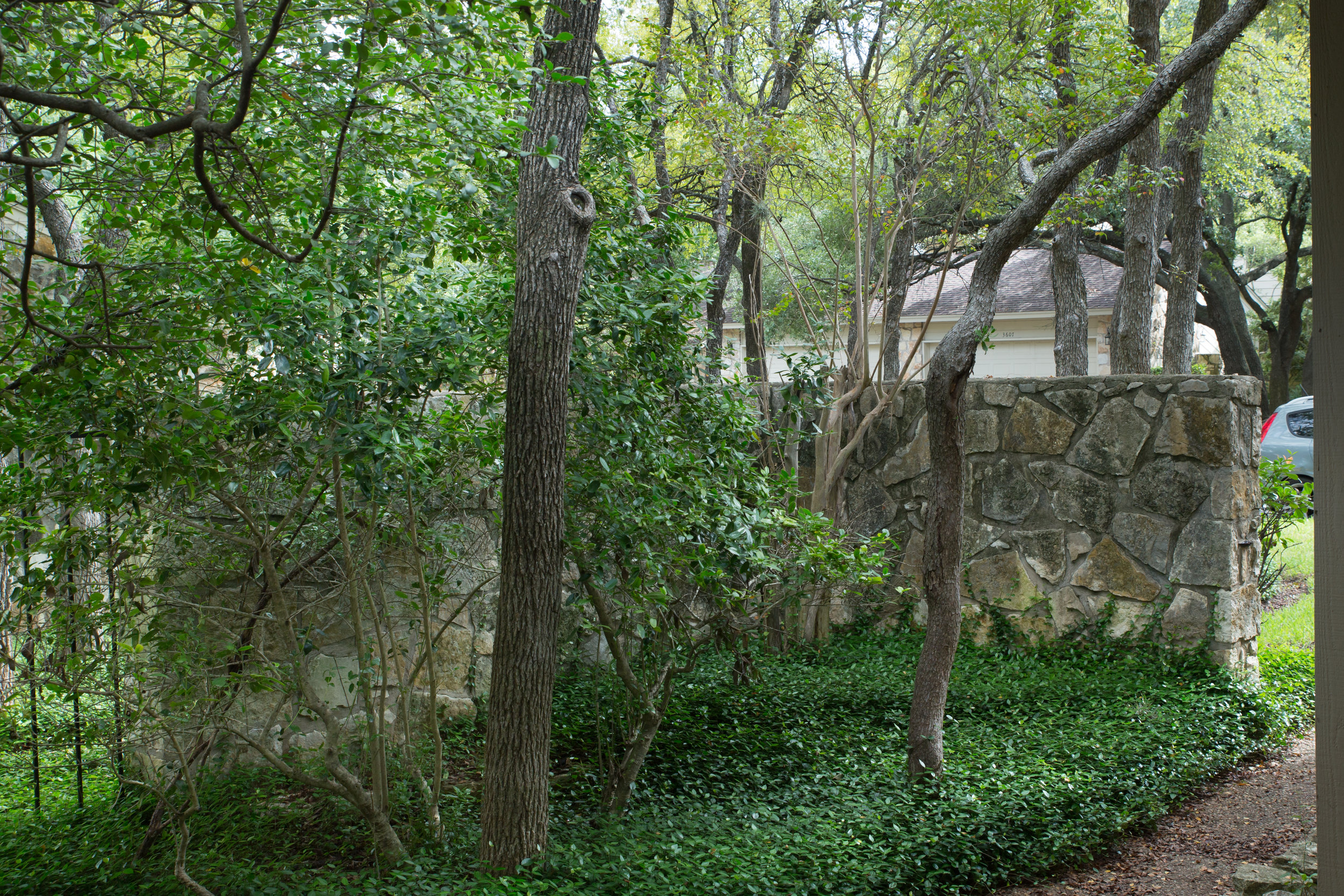 Overgrown front yard of condo before landscape design of renovated austin condo