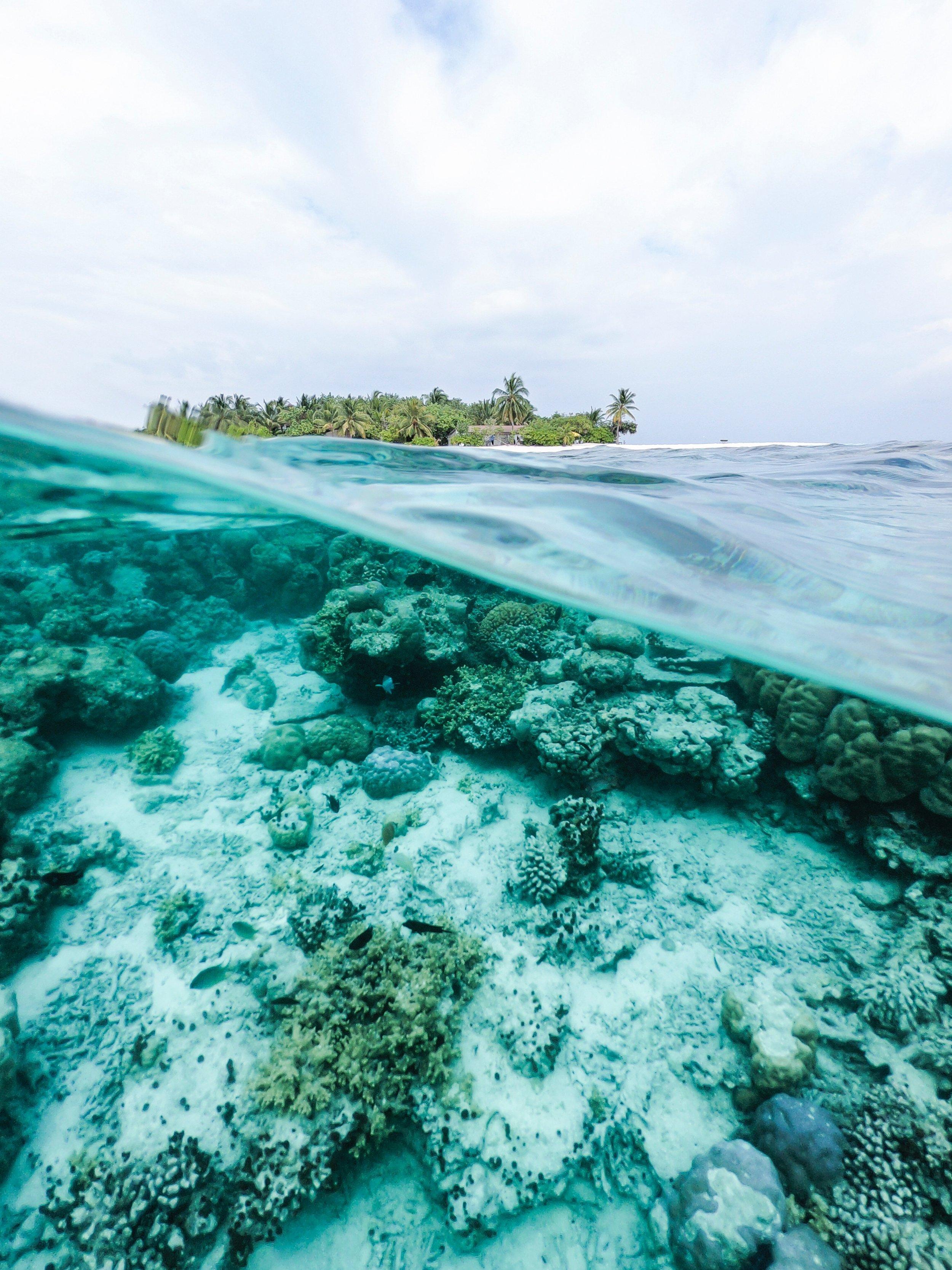 Sustainable_sunblock_coral_reef_ishan_seefromthesky_unsplash.jpg