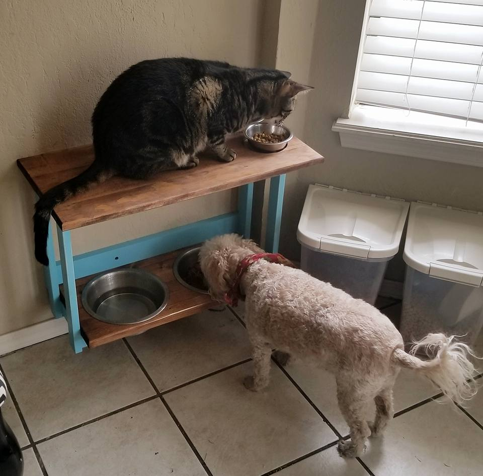Pet Stand Action.jpg