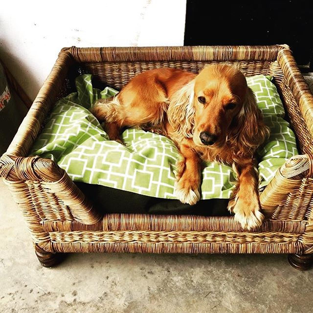 D O G  B A S K E T: Hand woven dog baskets available with cushion. Give your fury friend a comfortable start to 2018 🐶