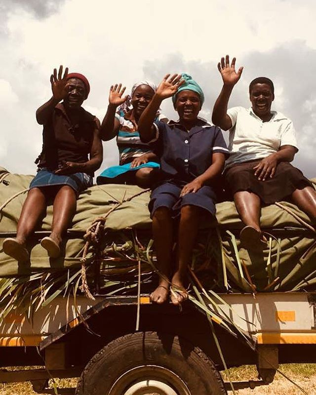 Another successful harvest completed by the @collaborative_craft_projects team! . . All smiles as the next step begins which is the drying of the reeds. Once dried the traditional weaving and detailing can begin. . . . Stay tuned as we take you on the journey of this age old tradition. . . . See you at Bondi this Sunday 😀☀️💦 . . 📷@collaborative_craft_projects  #handmade #africanartisans #africa #harvest #baskets #supportcommunity #raw #africanstyle #rawnaterials #authentic #traditional #africanhomewares