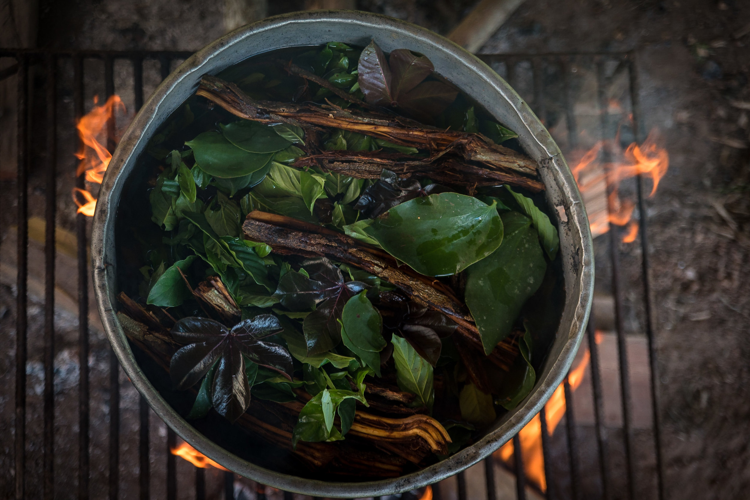 AN ANCIENT TRADITION - AYAHUASCA