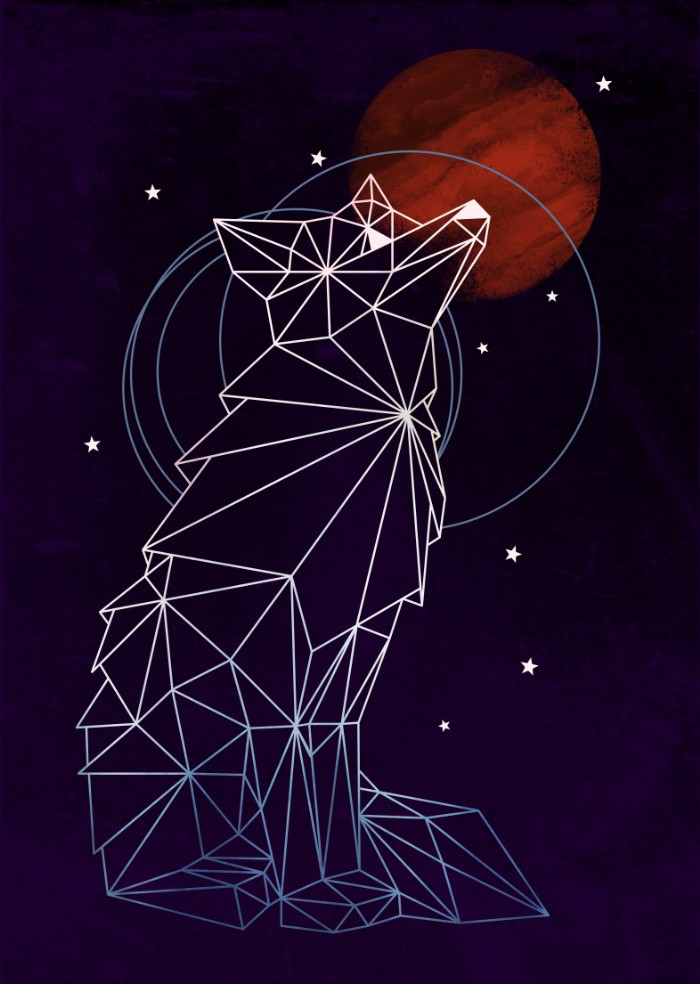 Fox in the Stars