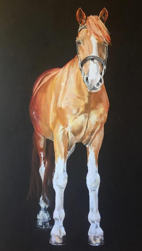 Single horse.jpg