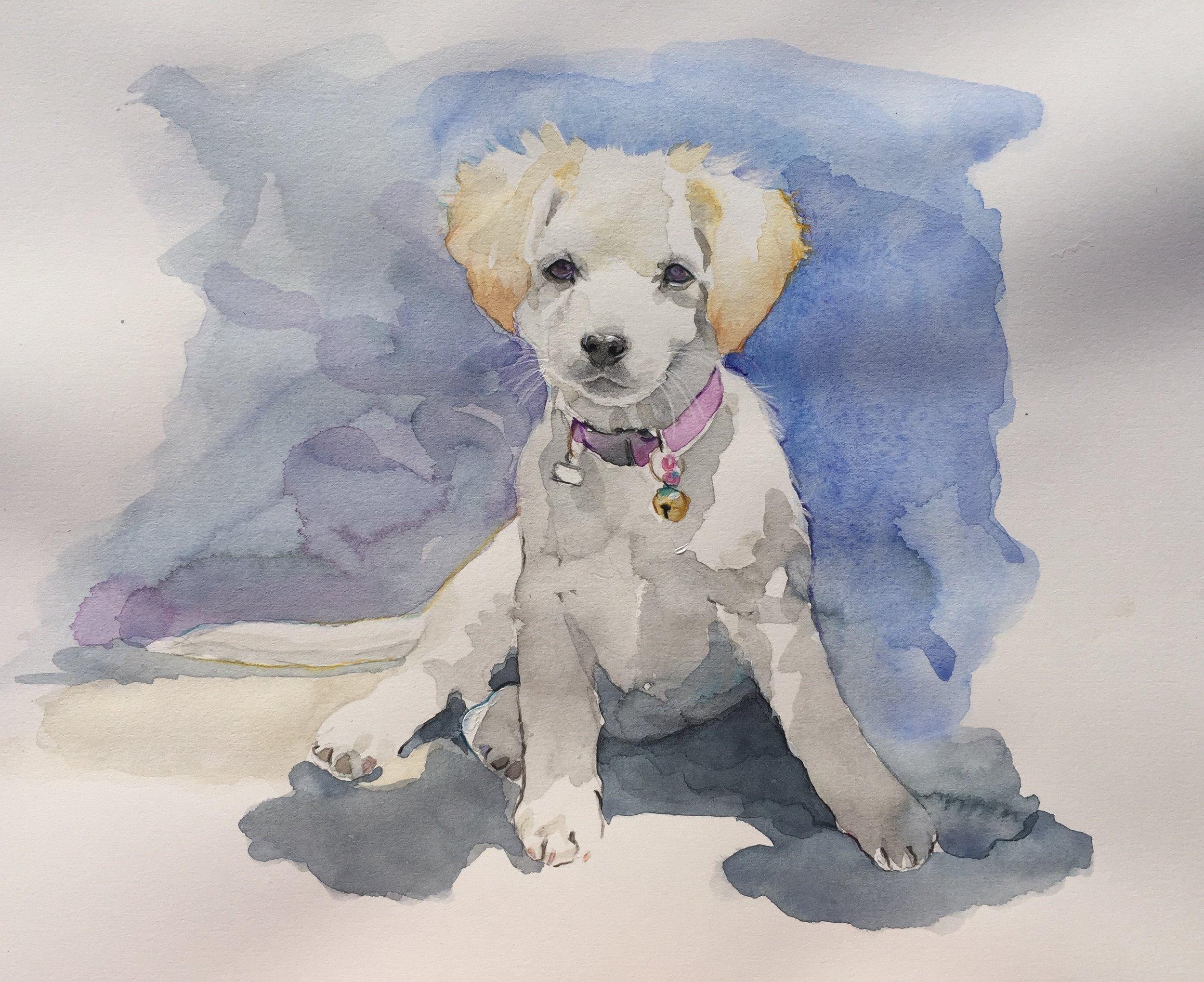 Watercolour dog.jpg