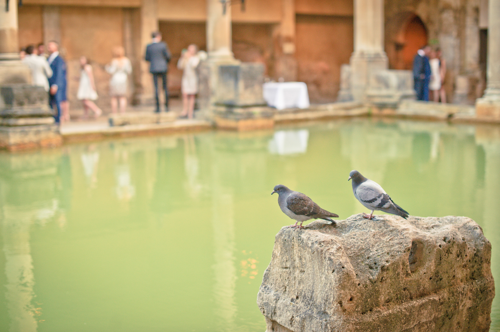 Two uninvited but welcome guests in the form of pigeons at the Roman Baths. The green water and human guests can be seen in the background,