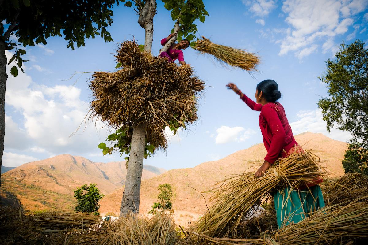 Field workers, Sindhuli Valley, Nepal-5601.jpg