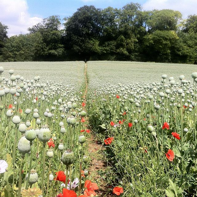 It sure is starting to feel like spring with trees blossoming, cold mornings and milder days. #chilterns #poppies #miniadventure