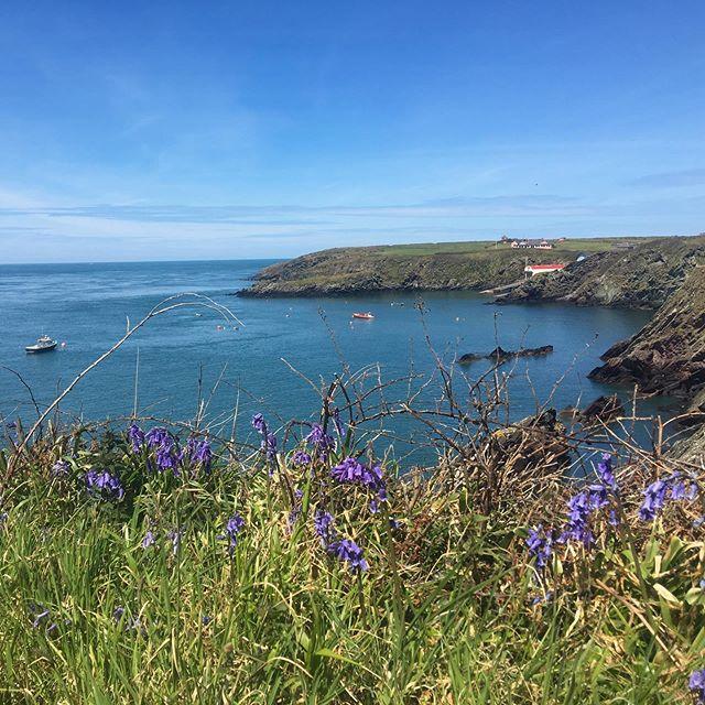 Wales best kept secret...the beautiful Pembrokeshire coastline a few miles away from St David's. #pembrokshire #wales #ukcoast