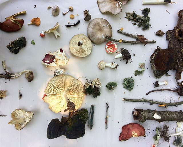 Mycelial magic with @catskillfungi who led a walk at Deer Creek this past Sunday. We had a blast and now have wine cap spawn in the garden to keep our eyes on🍄. For those who missed the walk, John will be back September 29th👏🏼