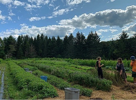 Last week we hosted students from ArborVitae Herb School @arborvitae_ny in NYC to the farm to talk herbs, harvest, garble and share ideas. You know it was a day of presence and attentiveness when no one has barely any photos to show for it! We're grateful for all this who attended and shared in the day and to @criaturaplacida and @hayleymaier for organizing 🙏🏼