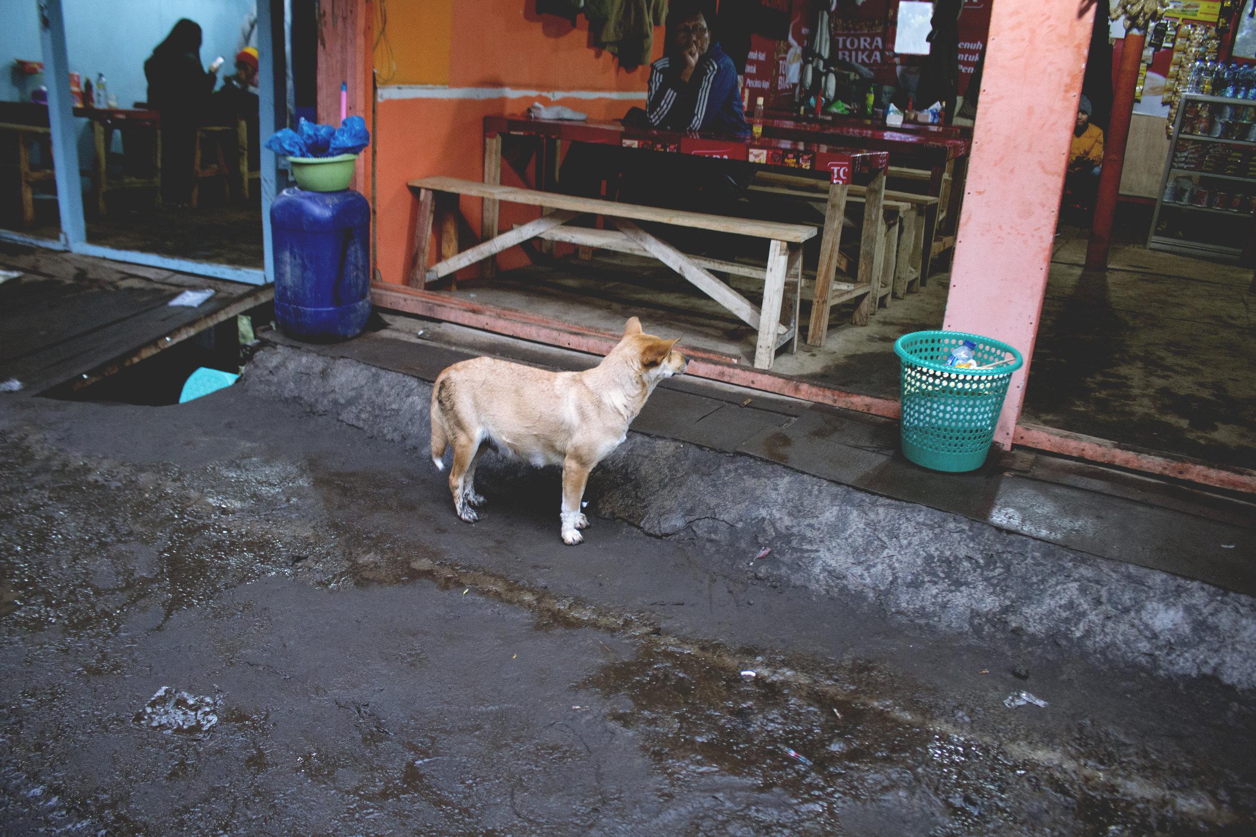 Indonesia0023.jpg