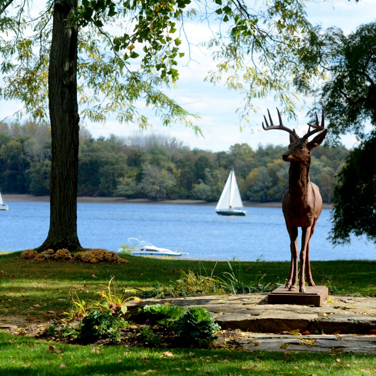 deer state with boats in background - Lisa Varley.jpg