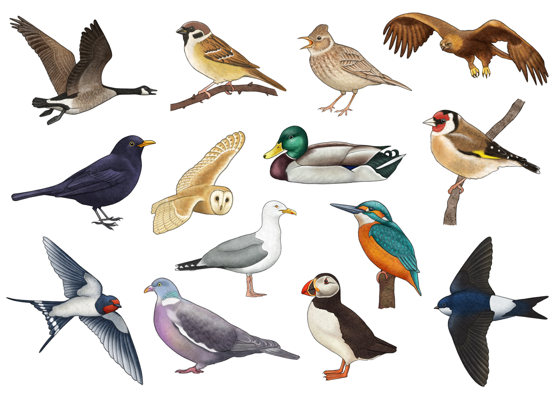 Let's Discover: Birds