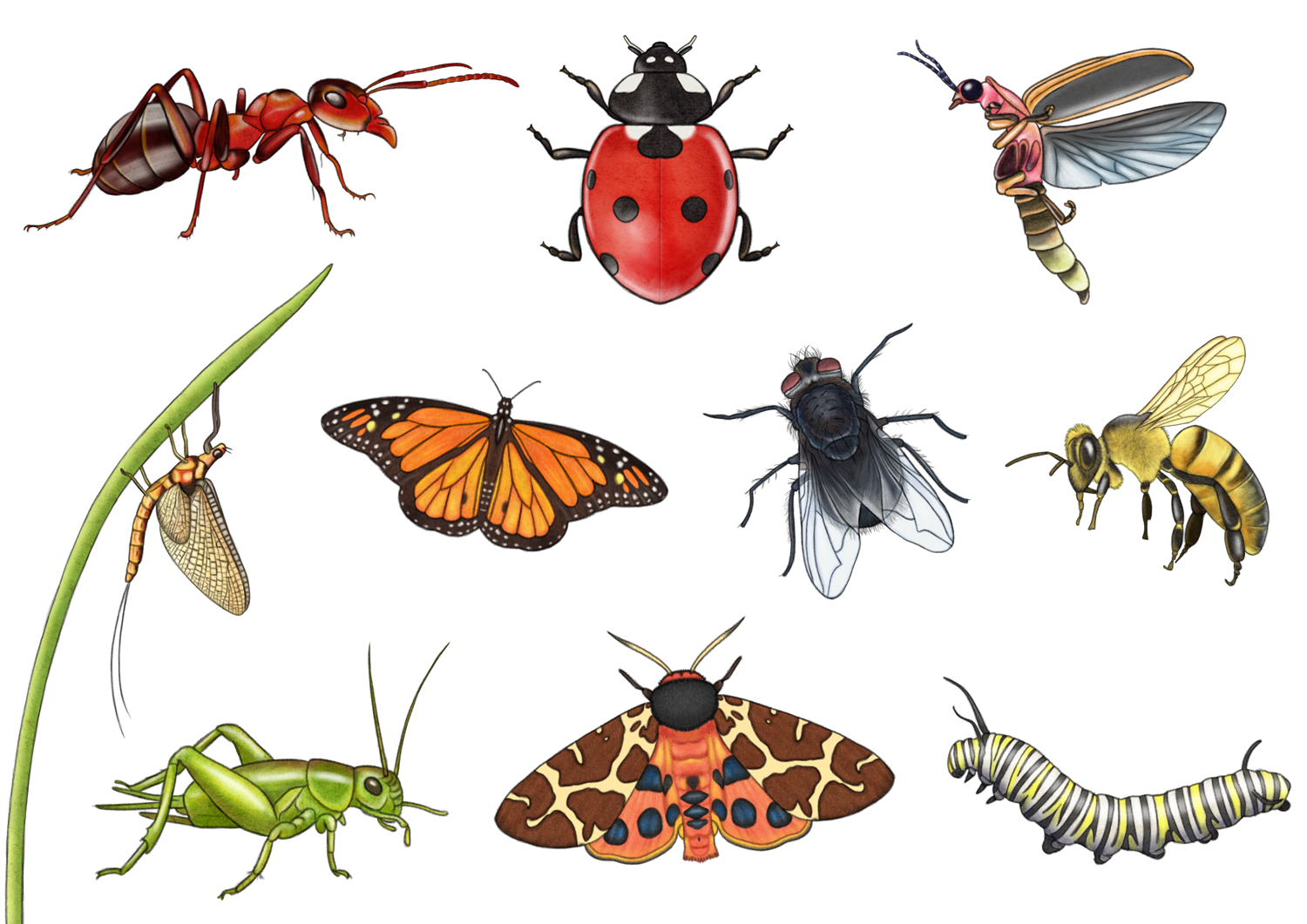 Let's Discover: Bugs