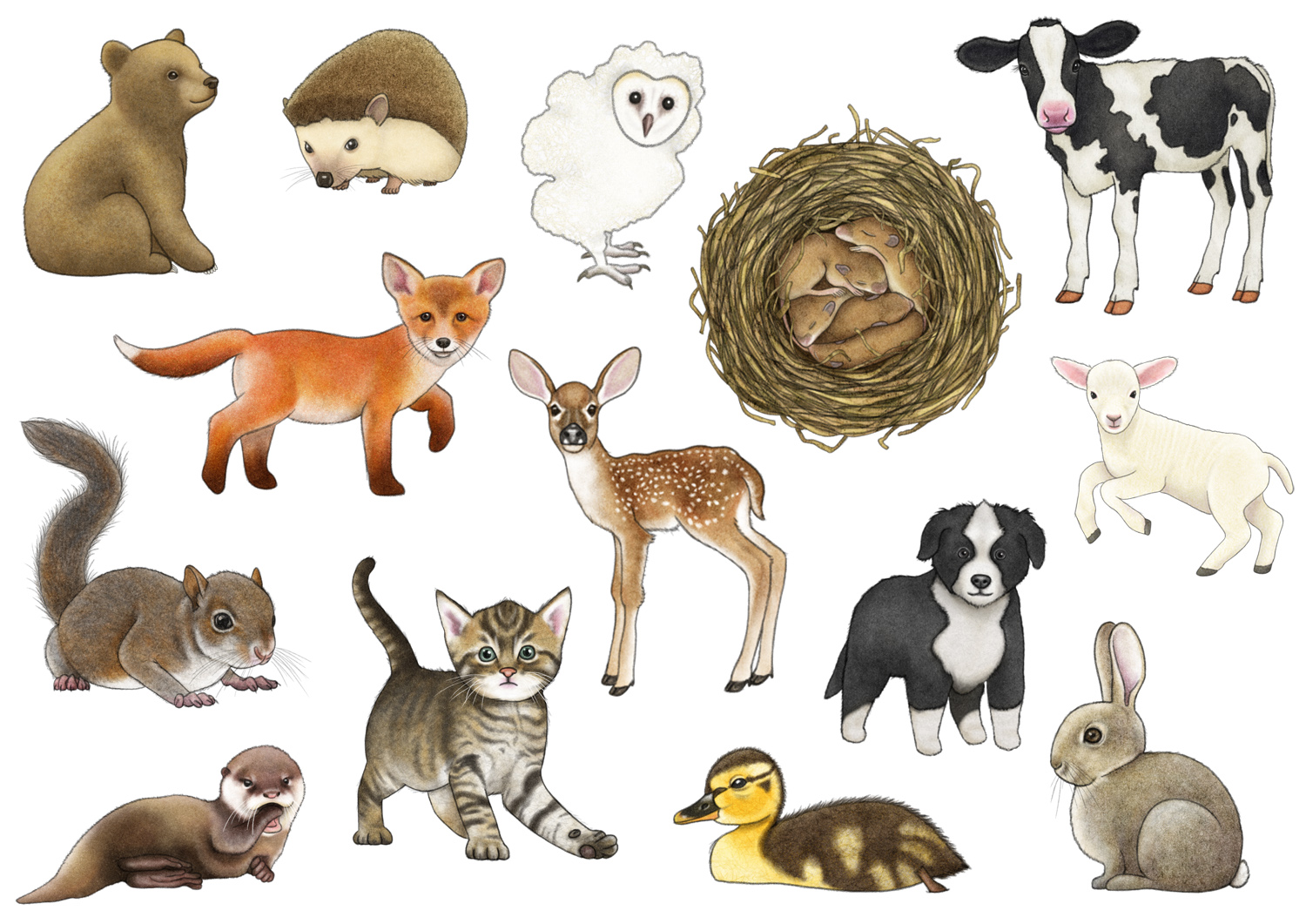 Baby Animals Artwork
