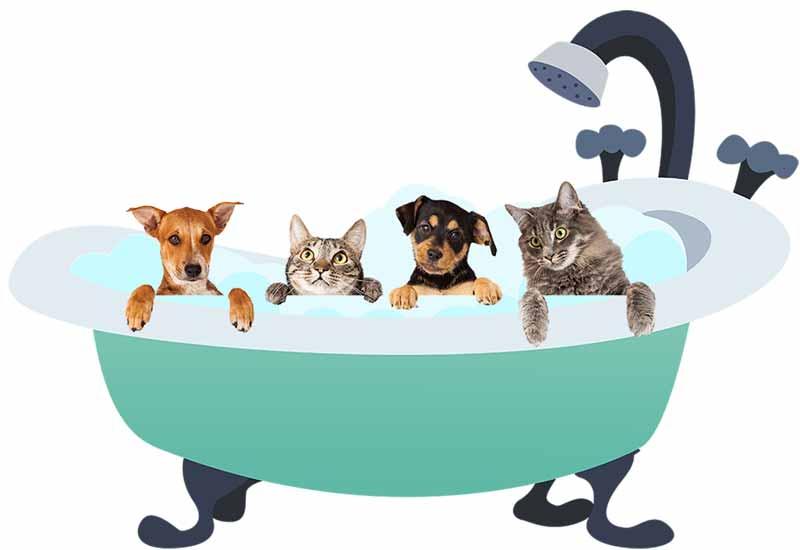 pets+in+tub+5.jpg