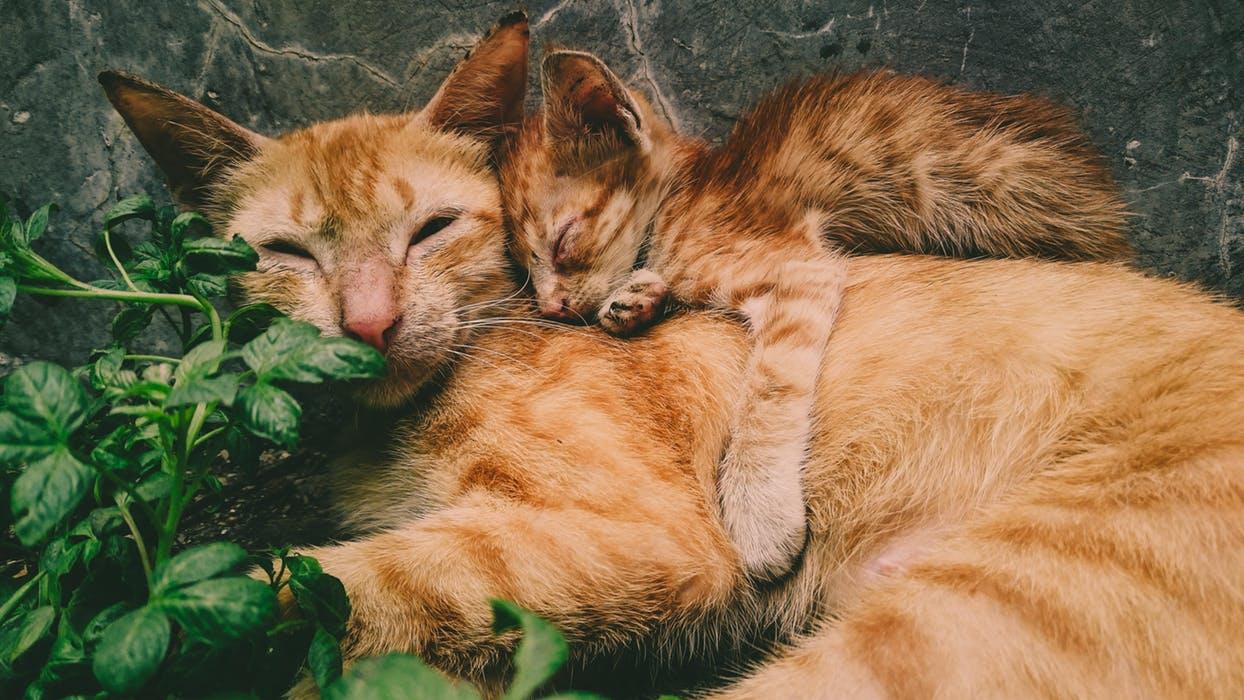 cat groomer slc