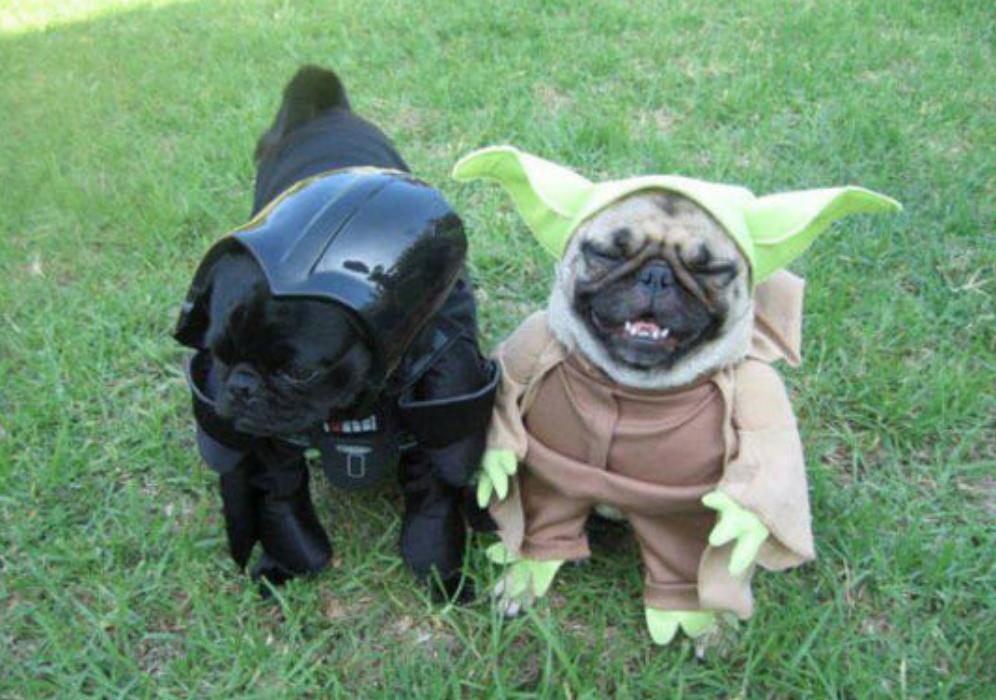 dog groomers slc