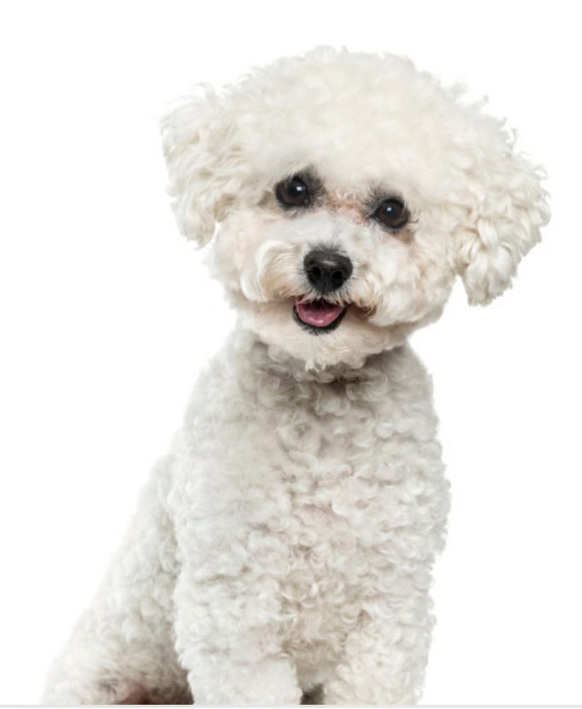 kennel cut dog groomer slc